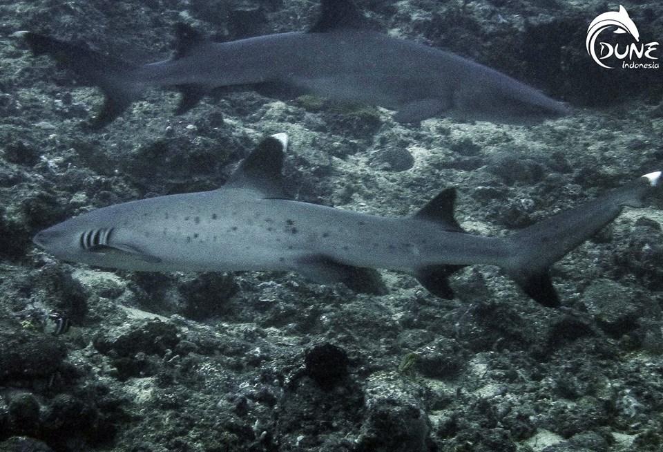 best scuba diving in bali