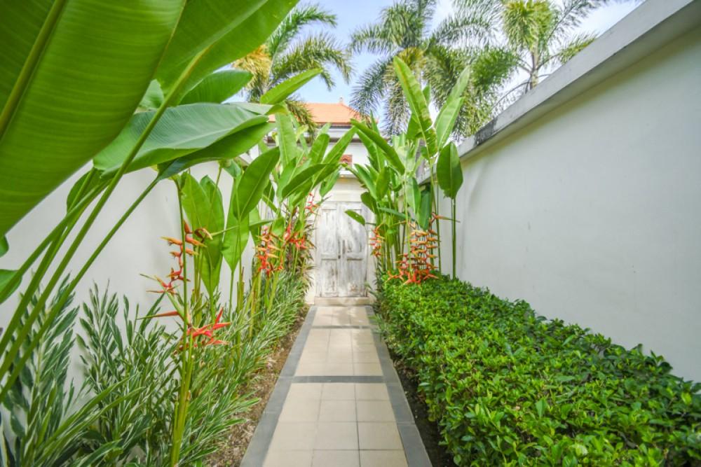 Make a lush, tropical canopy
